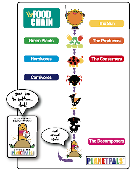 A visual Food Chain