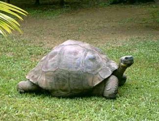 turtle405yrs